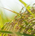 政府所有米穀販売情報